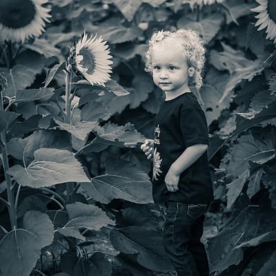 Hayley Myers-Sunflower Mini's