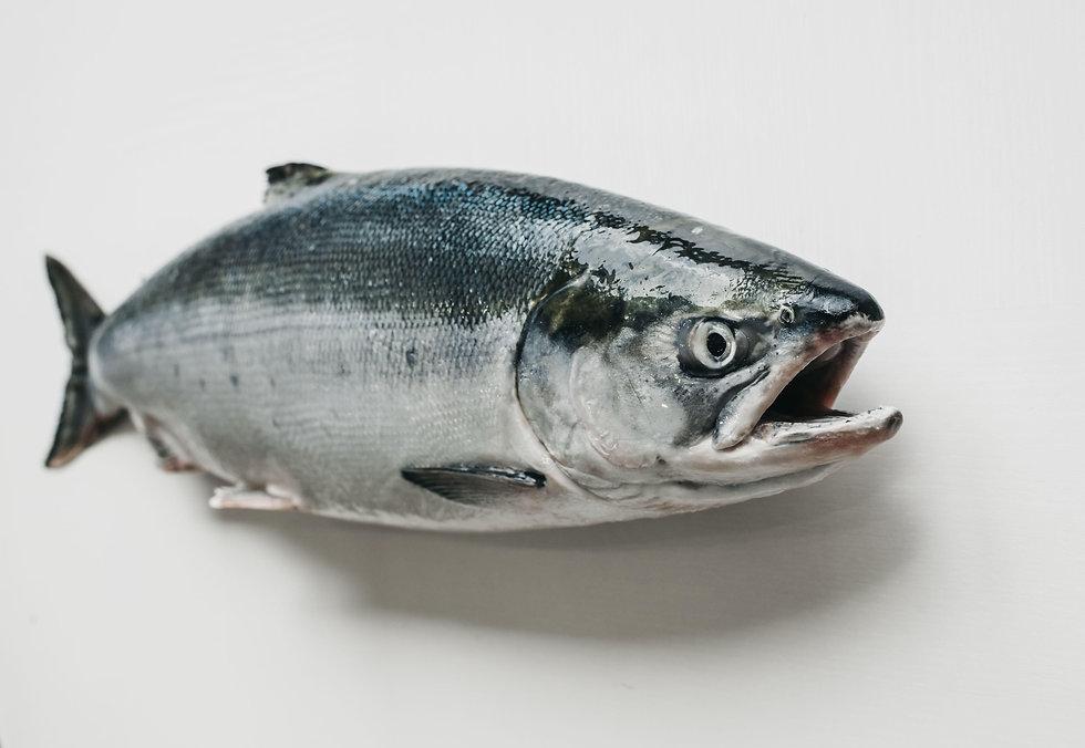 Fish stare.jpg