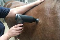 Massage-Pferd2.jpg