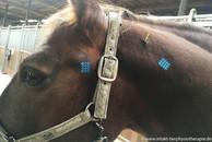 Crosstapes Pferd Pferdephysiotherapie in Essen NRW