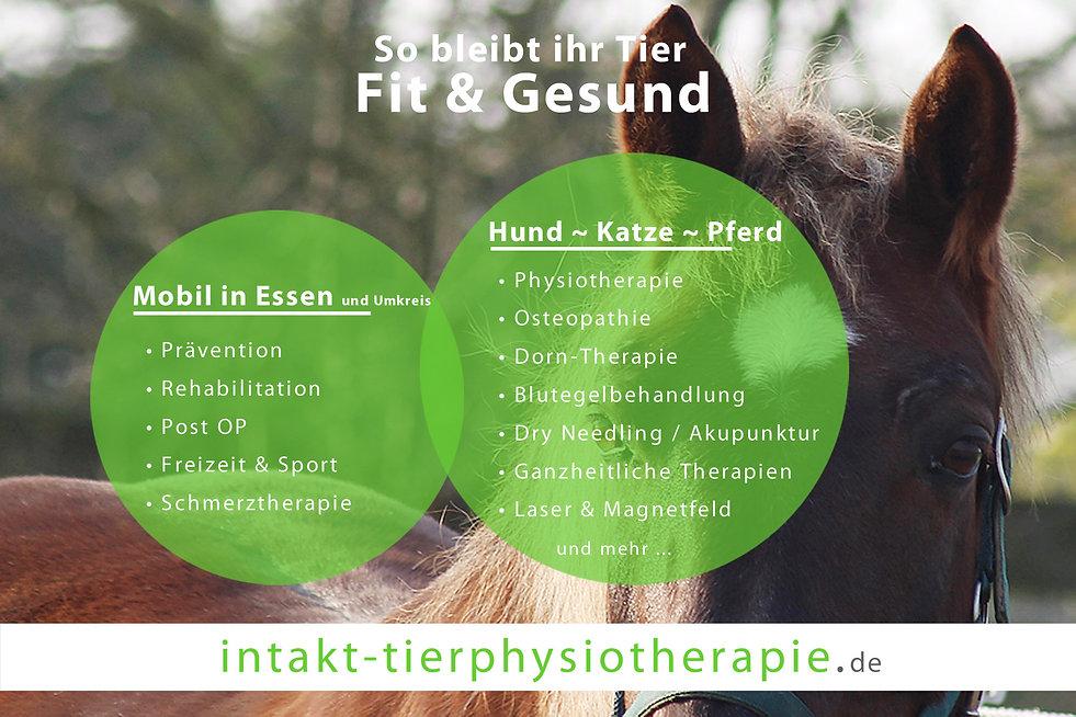 Fit & gesund mit Intakt Tierphysiotherapie