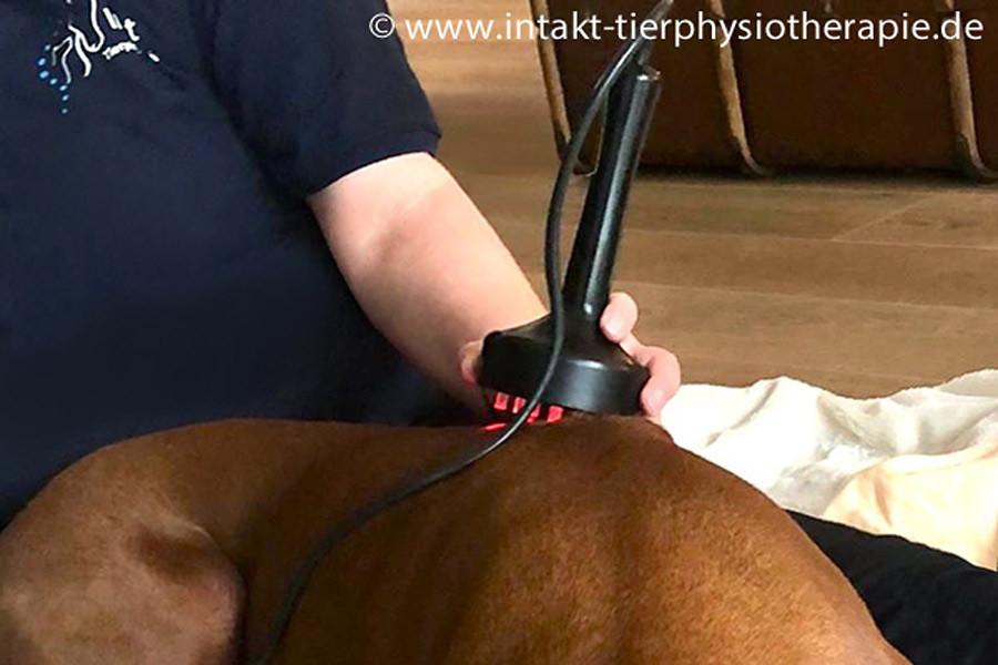 Bandscheibenvorfall bei Hund und Katze