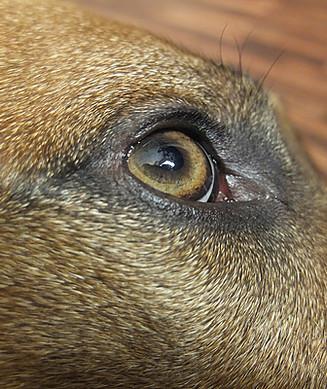Hundephysiotherapie Essen