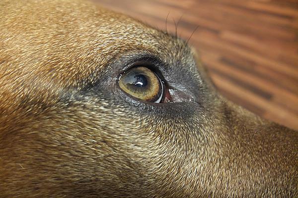 Flexibles Tiertaping bei Hunden - Hundephysiotherapie