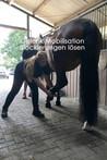 Gelenkmobilisation Pferdephysiotherapie in Essen