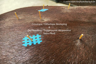 Triggerpunkt Akupunktur Pferd in Essen NRW