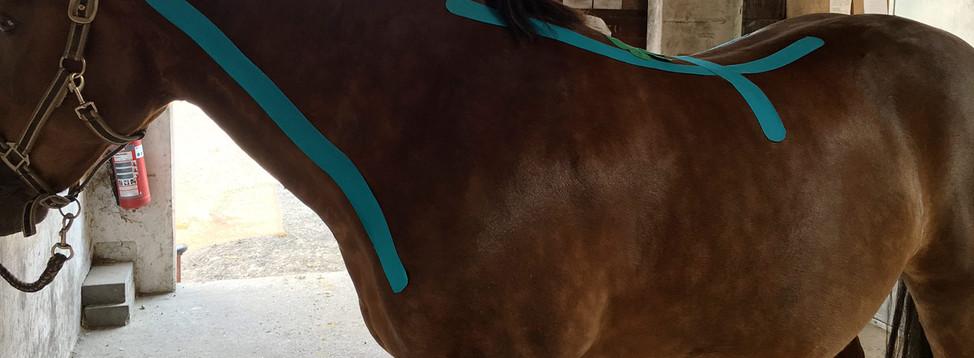 Taping beim Pferd