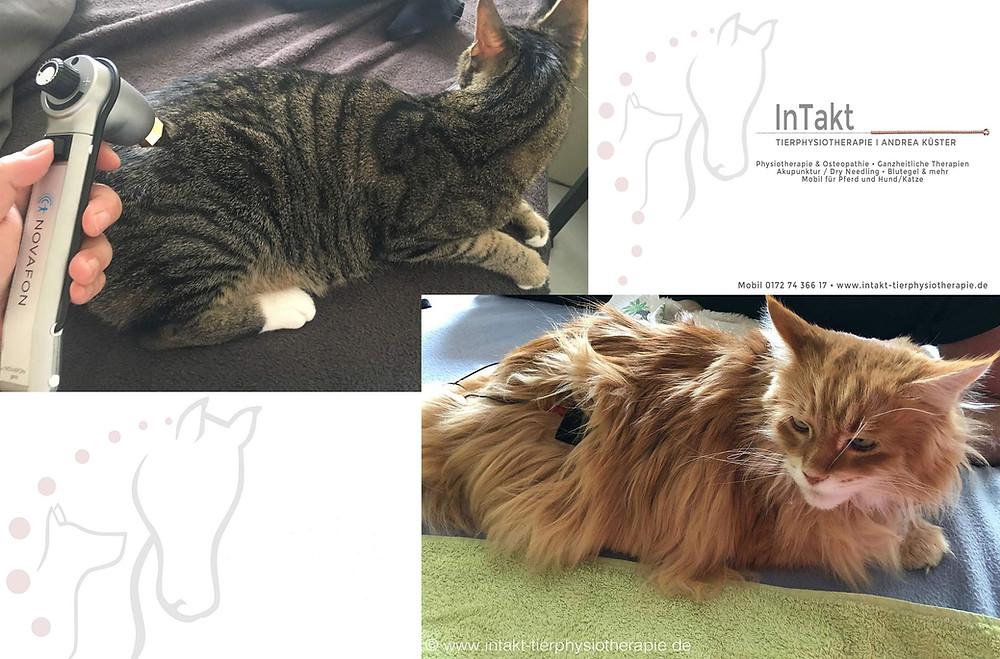 Schallwellentherapie und TENS für Katzen in Essen
