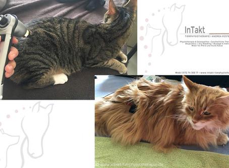 Physiotherapie & Osteopathie für Katzen? Aber ja!