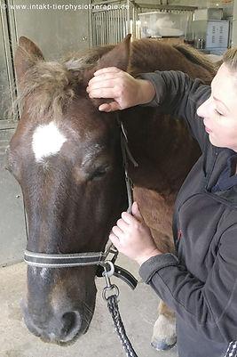 Pferdephysiotherapie Pferdeosteopathie Druse und Herpes im Umkreis Essen NRW