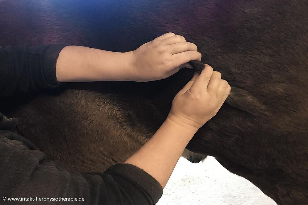 Intakt Tierphysiotherapie für Pferd und Hund in Essen NRW und Umkreis