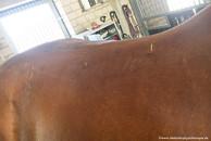 Equines Dry Needling