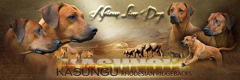 Banner-Kasungu.jpg