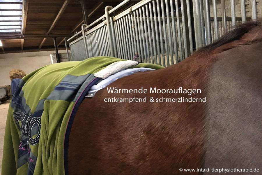 Pferdephysiotherapie und Hundephysiotherapie in Essen und Umkreis NRW