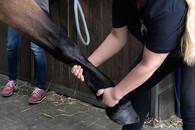 Osteopathie Physiotherapie Pferd in Essen NRW
