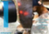 LLLT Lasertherapie Hund Katze Pferd