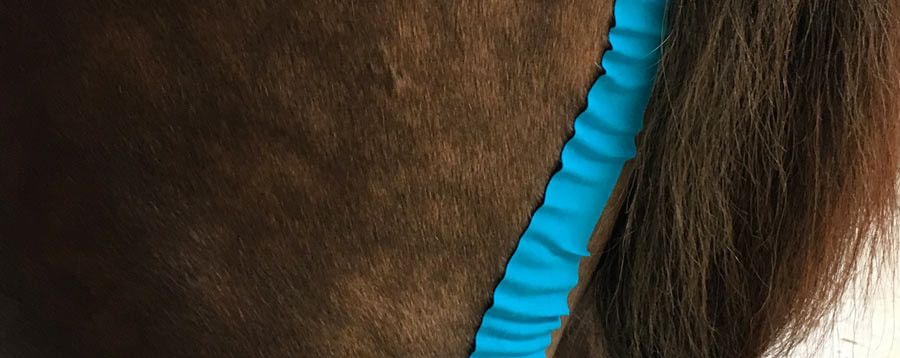 Muskelanlage Tape Pferd