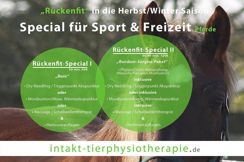 Rückenfit-Pferdephysiotherapie.jpg
