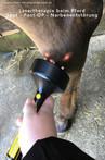 Lasertherapie-Pferd