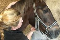 Mobilisation Zungenbein beim Pferd