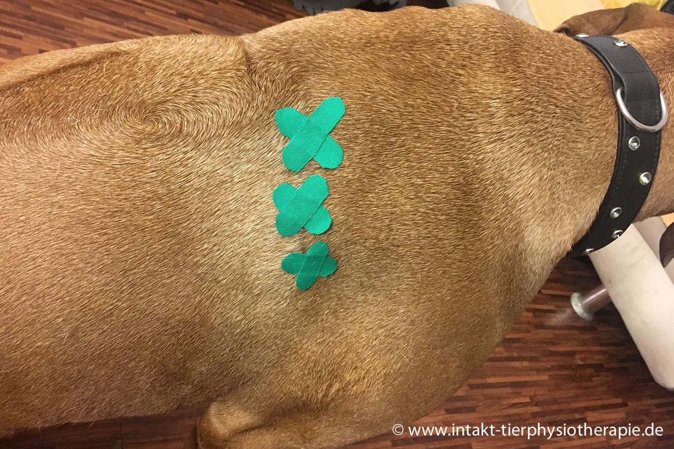 Kinesio Taping Hund.jpg