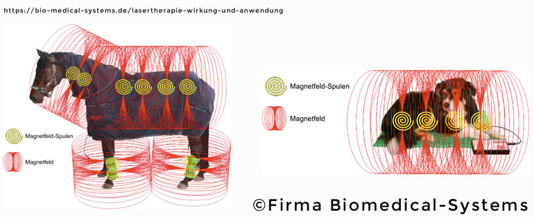 Biomecal-Magnetfeldtherapie