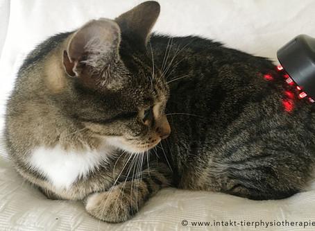 NEU - Lasertherapie für Hunde, Katzen und Pferde