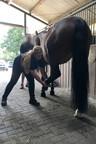 Osteopathie Pferd in Essen NRW