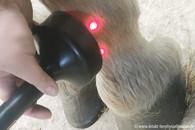 Lasertherapie-Fesselgelenkarthrose.jpg