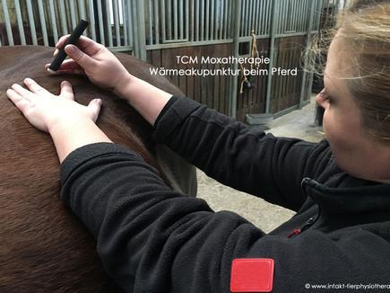 Triggerpunkt Moxibustion -Wärmeakupunktur Pferd & Hund
