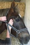 Traktion Kiefergelenk Pferd