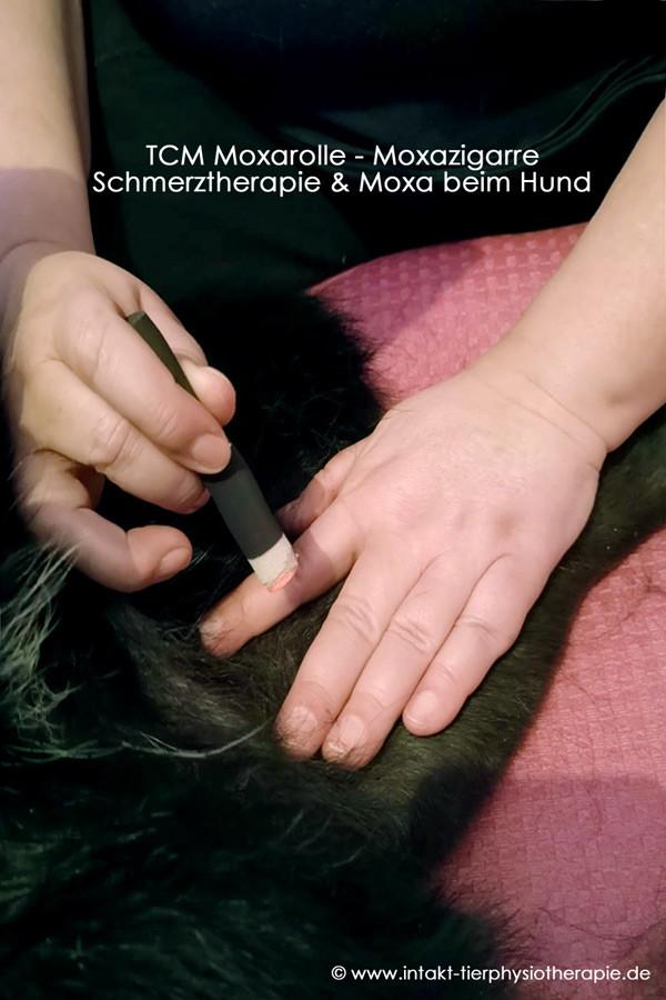 Wärmeakupunktur mit raucharmer Moxarolle beim Hund