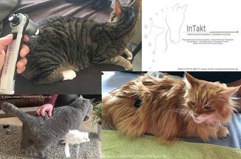 Katzenphysiotherapie - Katzenosteopathie