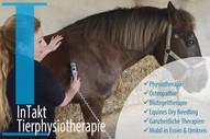 Tierphysiotherapie und Osteopathie für Tiere in Essen