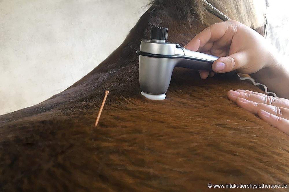 Pferdephysiotherapie Osteopathie Pferd Schallwellen Therapie Novafon