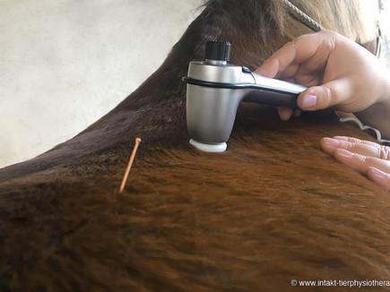 Intraschallwellentherapie für Pferd & Hund