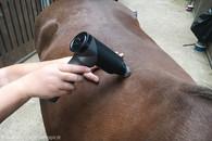 Massage-Pferd1.jpg