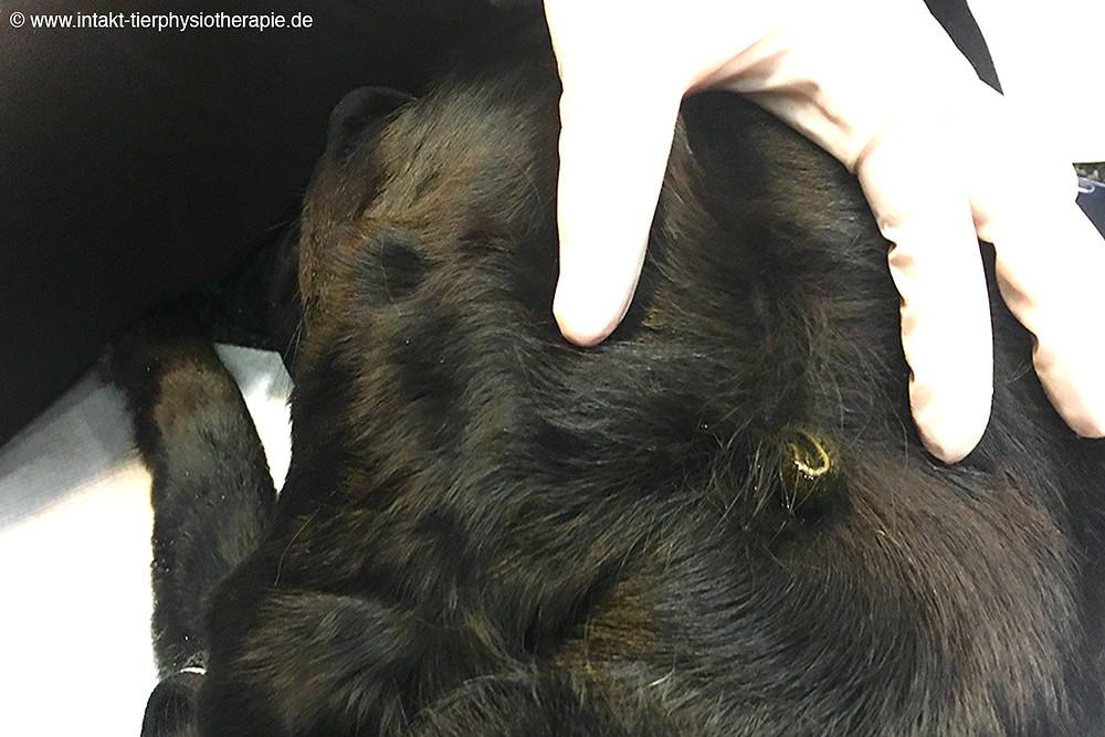 InTakt Tierphysiotherapie Andrea Küster in Essen und Umkreis NRW
