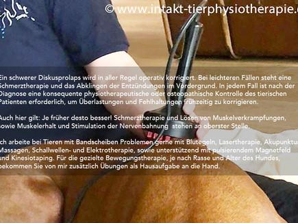 Bandscheibenvorfall beim Hund (und Katze)