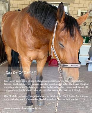 Akupunktur bei Tieren - Intakt Tierphysiotherapie in Essen