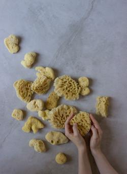 Sponges 5 low res