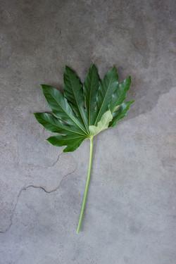 Leaf 2 low res
