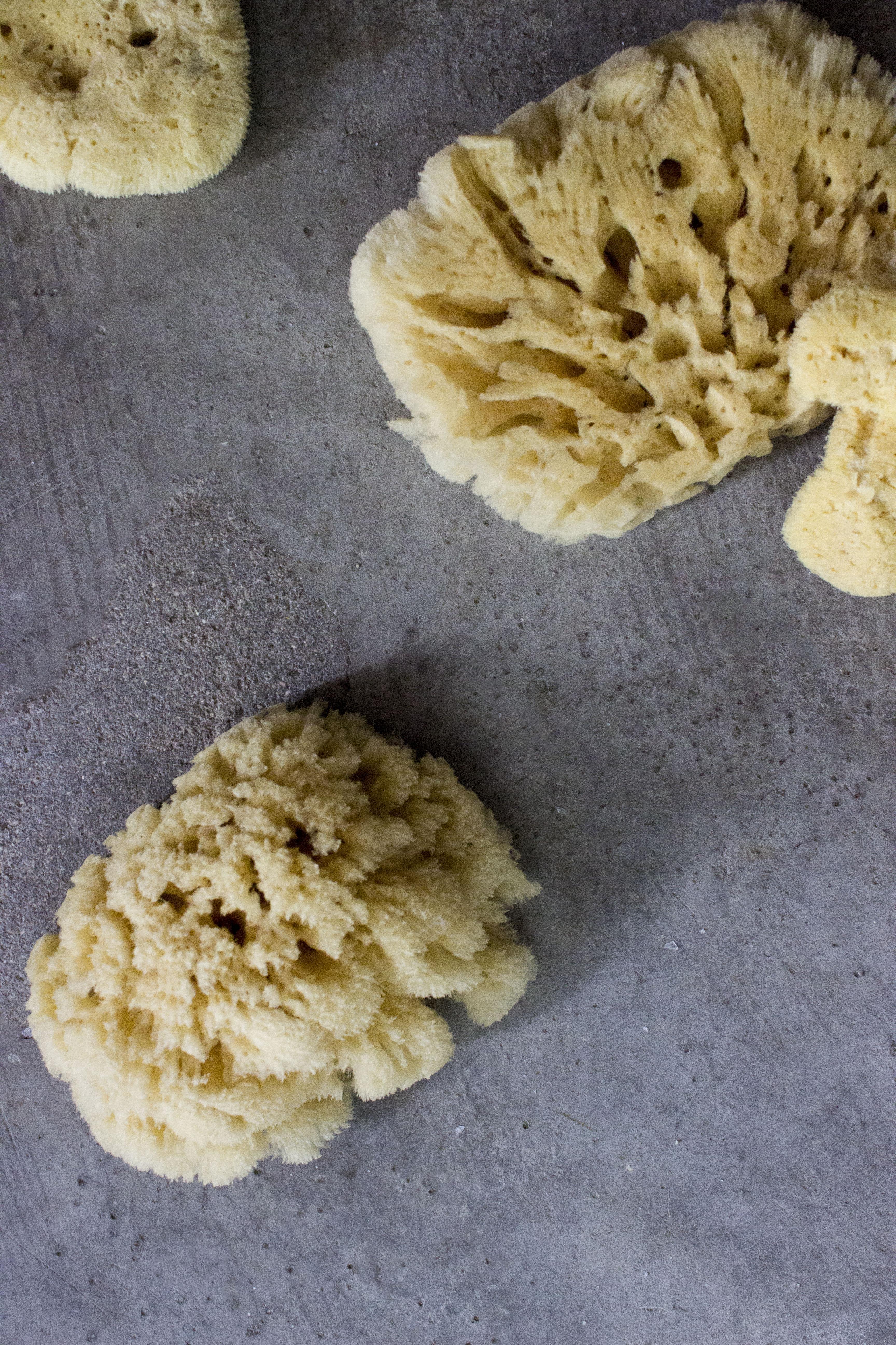 Sponges 1 low res