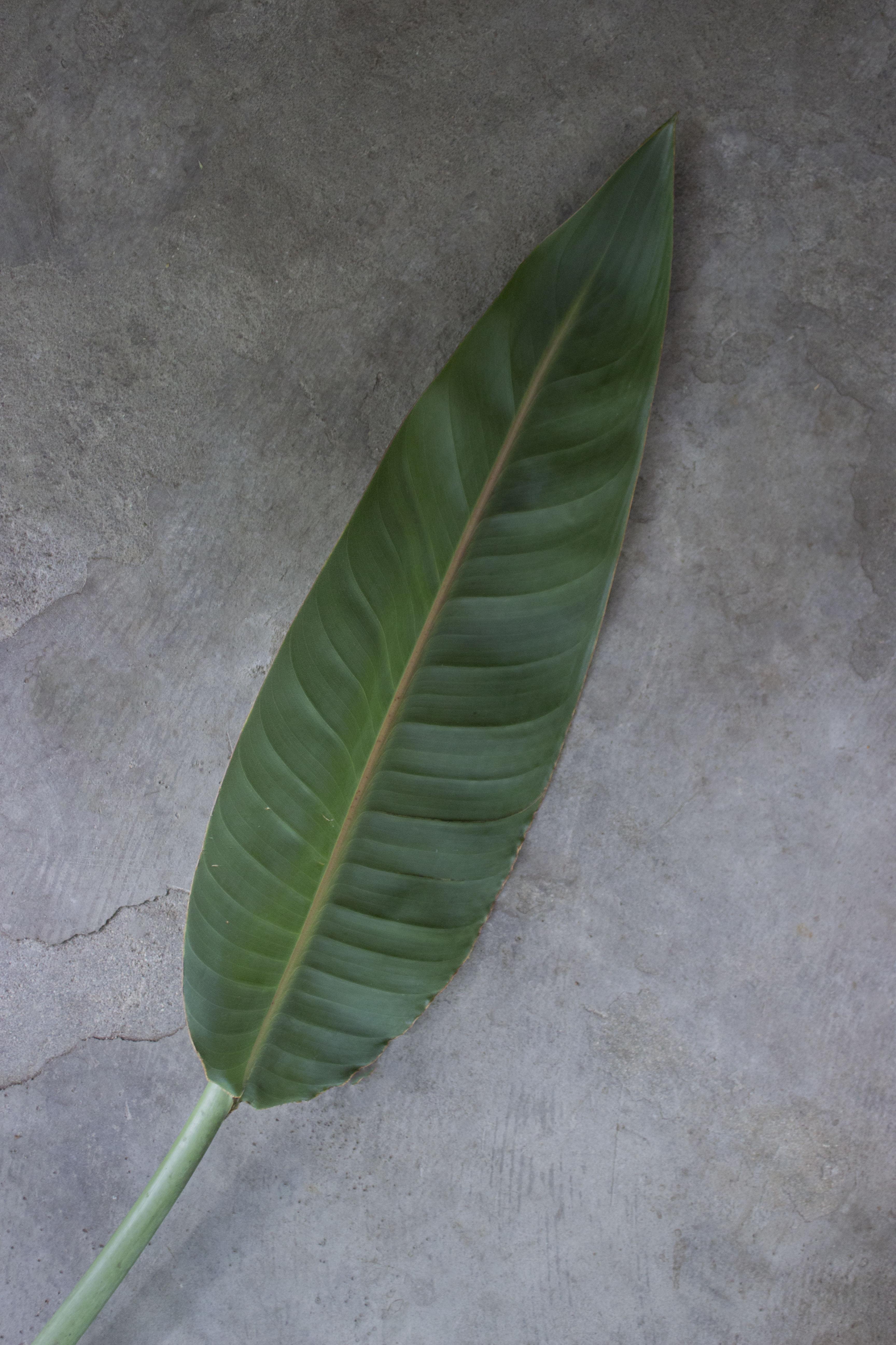Leaf 1 low res