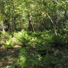 Lush woodland vegetation