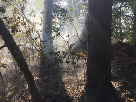 Island on Fall Lake catches fire
