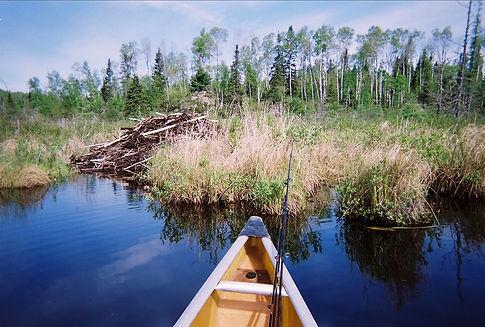BWCA bever dam, Fishing in the BWCA, Ely Minnesota