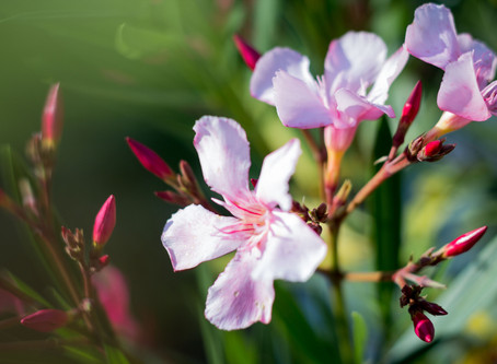 Summery Flowers