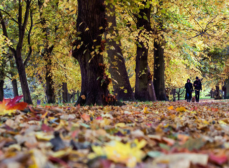 Loving Autumn in London