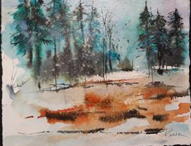 Silent Snow on Pines